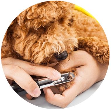 striženje nohtov pri psu