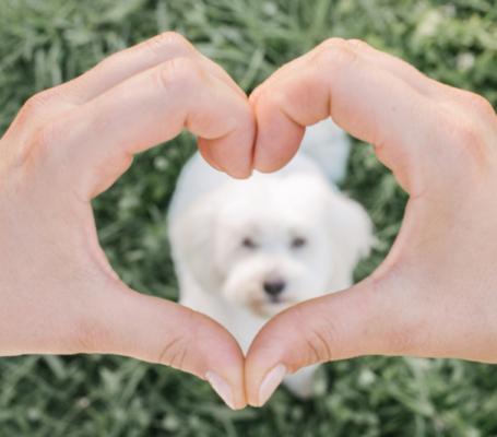 Ljubezen do psov