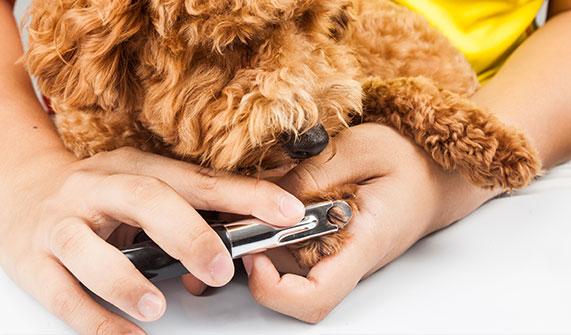 striženje krempljev psa